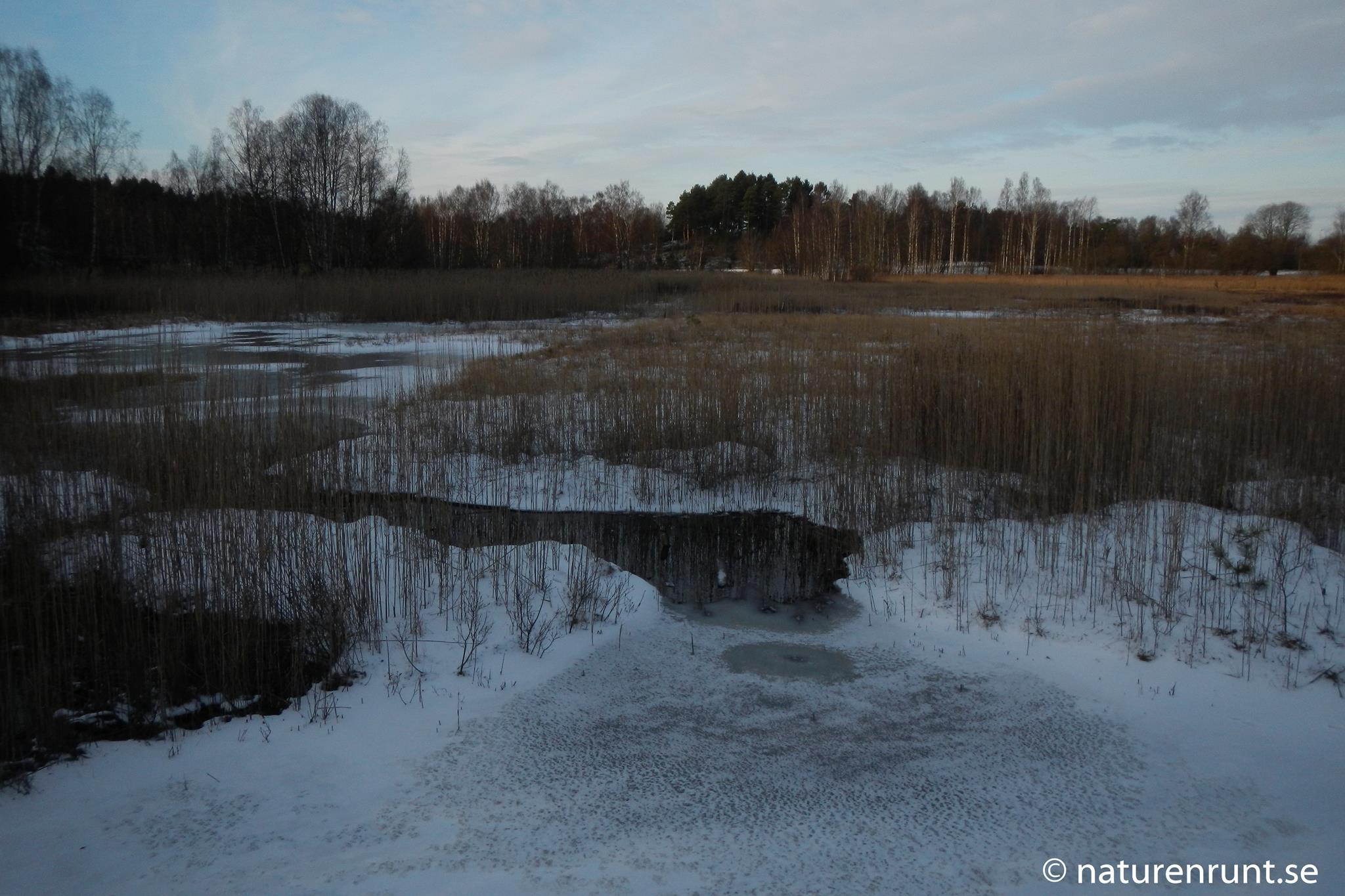 Gunnestorps mosse - våtmark i vinterskrud