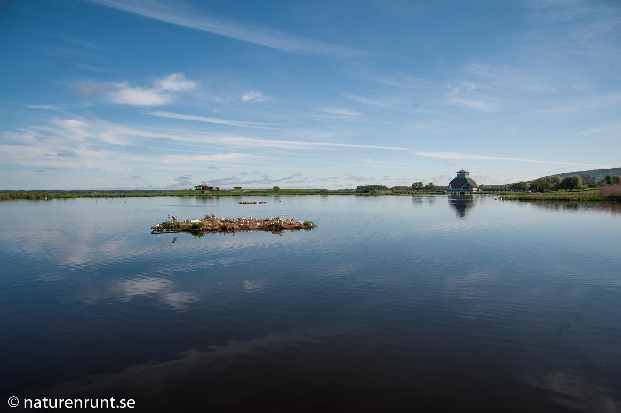 Hornborgasjön - Vy mot Naturum lokalen vid Fågeludden