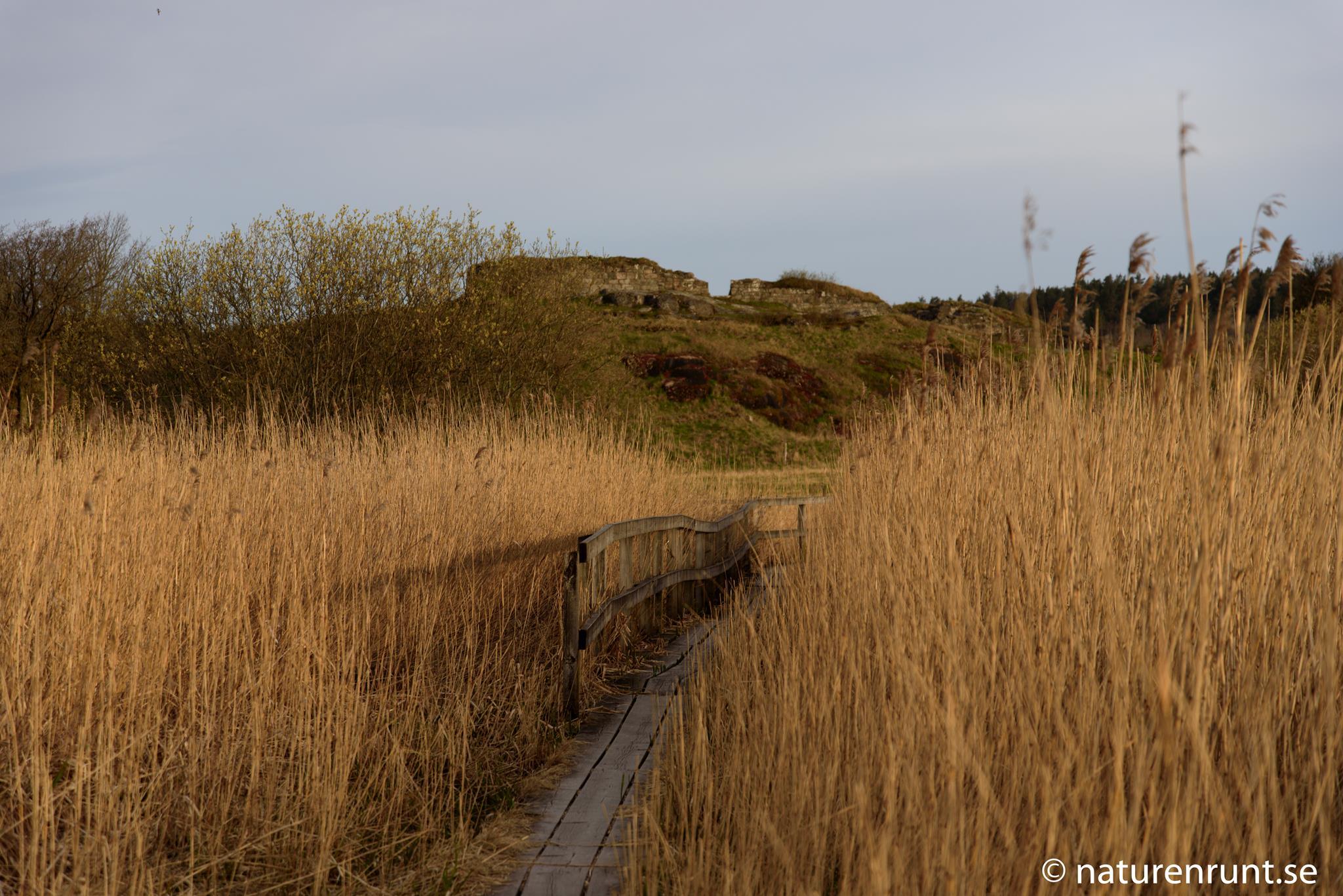 Ragnhildsholmen - En spång genom vassen